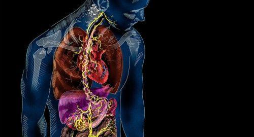Come attivare il nervo vago per reagire allo stress da covid19